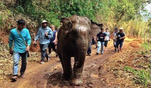 Cuộc gặp cảm động của voi con bị bắt làm du lịch và mẹ