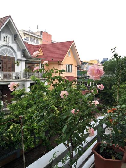 Kinh nghiệm 'đau thương' của người trồng 50 loại hoa hồng