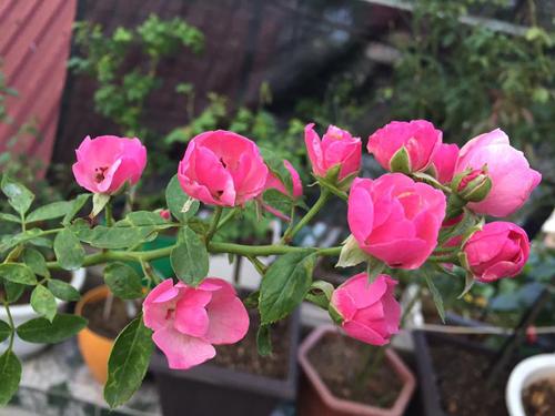 Vườn hoa hồng và phong lan đủ sắc màu