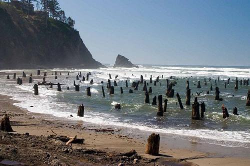 Khu rừng ma bị sóng thần chôn vùi hơn 300 năm