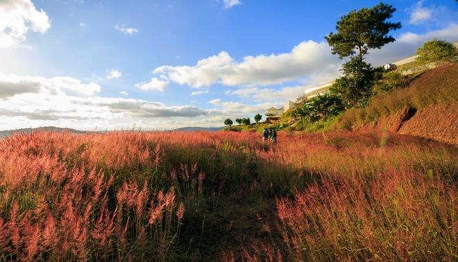 Ngắm đồi cỏ hồng đẹp như tranh ở Đà Lạt