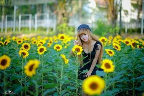 Vườn hoa hướng dương khoe sắc vàng rực ở Đồng Nai
