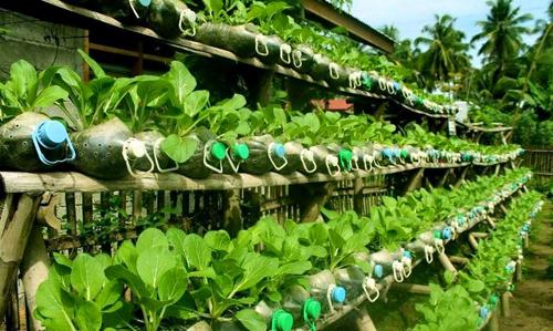 Tận dụng vỏ chai và bình nước để làm vườn rau tại nhà