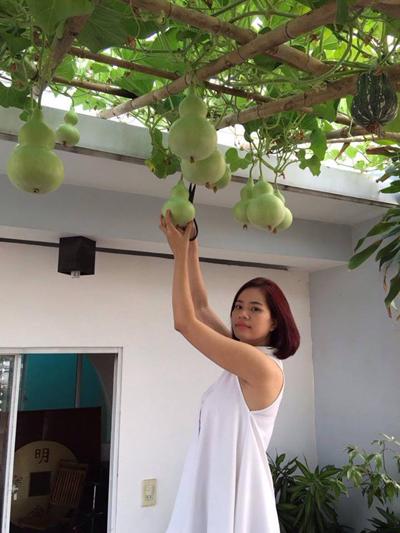 Sân thượng vời giàn bầu hồ lô sai lúc lỉu của gia đình ở Sài Gòn
