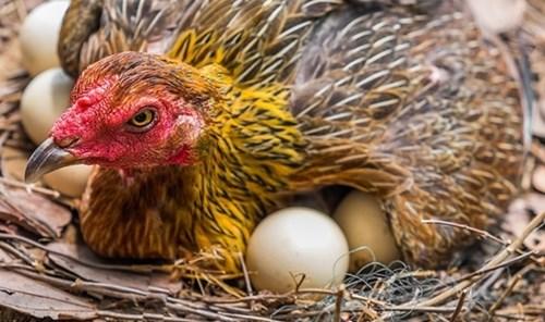 Bí quyết nhận biết ngay trứng hỏng hay trứng tươi mới