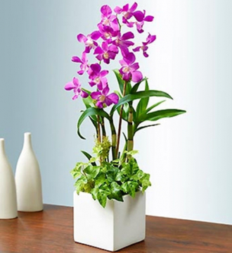 6 loài hoa đẹp thích hợp trồng ngày hè