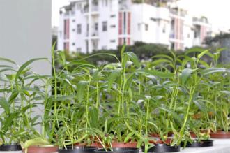 Những bâng khuâng của người trồng rau, hoa ở thành phố