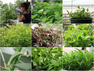 """Chăm vườn rau sân thượng - tuyệt chiêu """"cơm lành canh ngọt"""" của vợ chồng trẻ"""