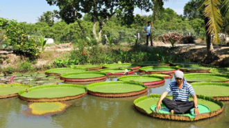 Ngôi chùa trồng loài sen lớn nhất thế giới ở Việt Nam