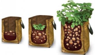 Tận dụng túi ni-lông trồng hàng cân khoai tây tại nhà