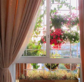 Vườn cây trên tường tạo thành không gian lãng mạn