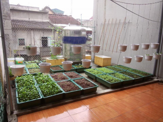 Vườn rau sân thượng mát mắt với rèm treo mồng tơi
