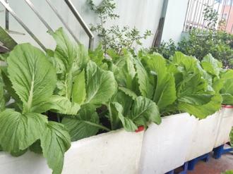 Các gia đình làm vườn đủ rau ăn cho cả nhà