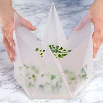 Hộp nhựa trồng rau mầm 2 tuần, không cần tưới