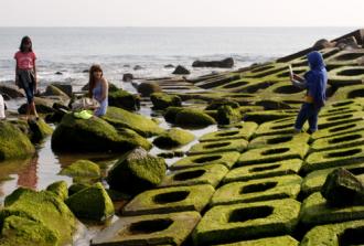 Ngắm bãi rêu xanh trên đá hút khách ở Phú Yên