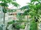 Vườn rau trên sân thượng của một Gia đình ở Hà Nội